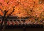 Momiji di Kyoto 70-200 f/2.8L IS USM