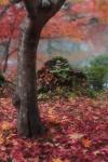 Momiji di Eikando Kyoto dengan 70-200 f/2.8L IS USM