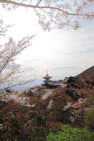 Musim semi (sakura)