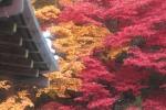 Salah satu spot momiji di area Nanzen-ji