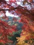 Momiji dan bukit di Arashiyama