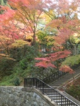 Suasana dalam kompleks Eikando pada musim momiji