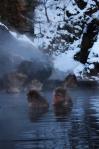 Monyet salju sedang berendam di kolam pemandian air panas di Jigokudani
